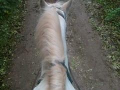 HORSE RIDING 025