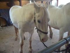 HORSE RIDING 041
