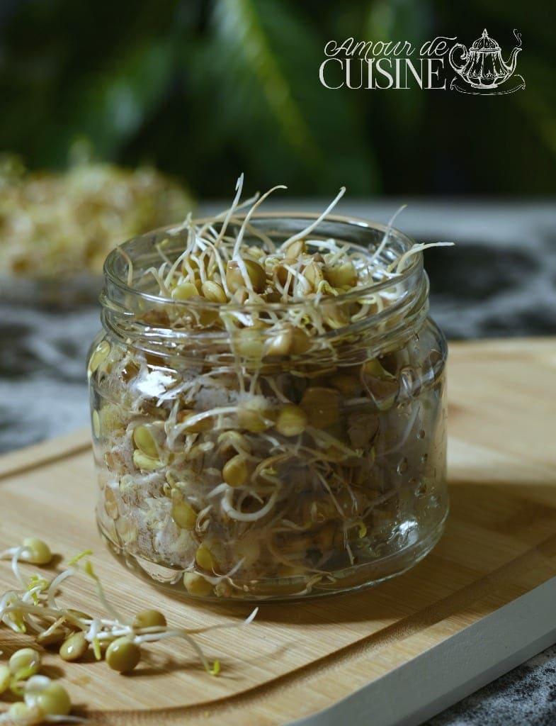 Comment faire des graines germées? les lentilles vertes